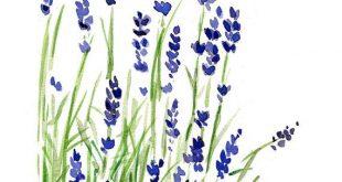 Lavendel Pflanze Kunst Druck, Lavendel Aquarell Druck, Lila Lavendel, grün, Pflanzen, botanische Kraut, Februar Geburtstag, Muttertag